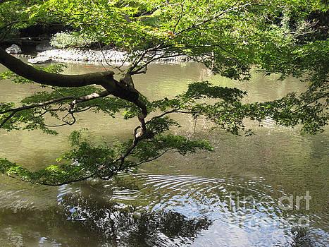 Happo-En Branch by Brandy Woods