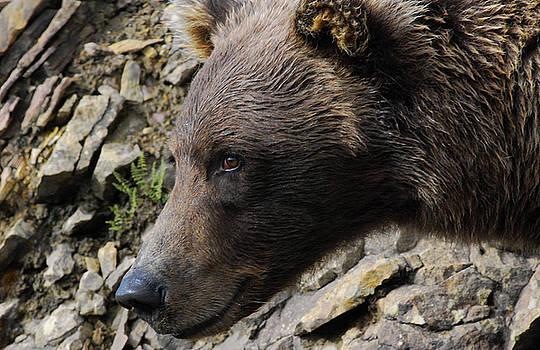 Happy Bear by Preston Zeller