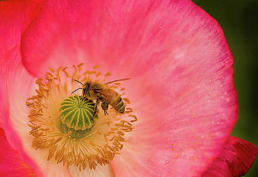 Happy Bee by Bob Cournoyer