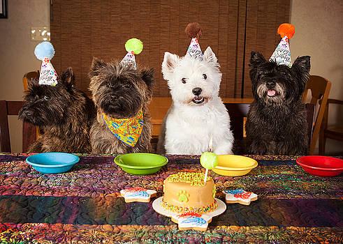 Happy Birthday Terriers by Heidi Marcinik