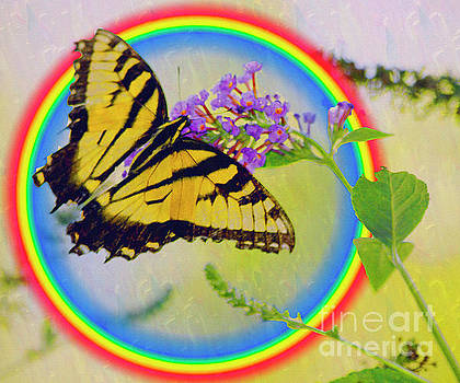 Butterfly Rainbow by Carol F Austin