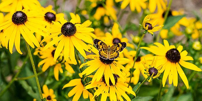 Happy Butterfly by Ron Dubin