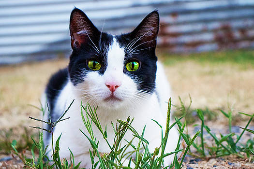 Happy Cat by Naomi Burgess