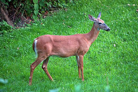 Happy Deer by Jeff Severson
