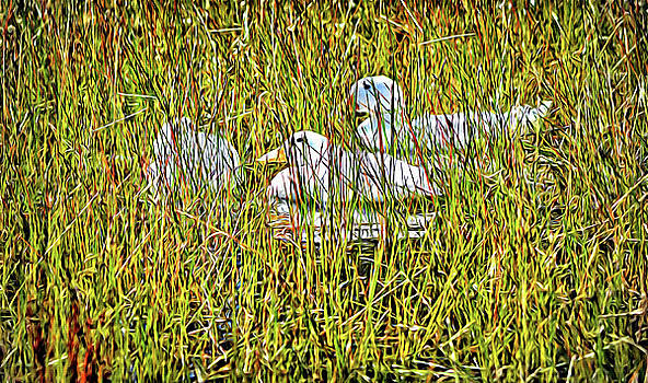 Happy Ducks by Barbara Dudley