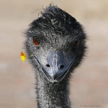 Happy Emu by Ivana Westin