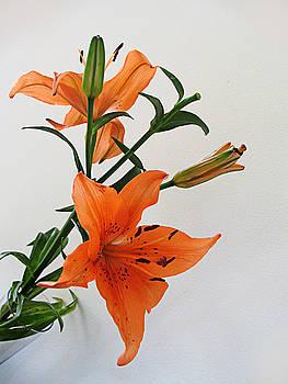 Happy flowers by Arvind T Akki