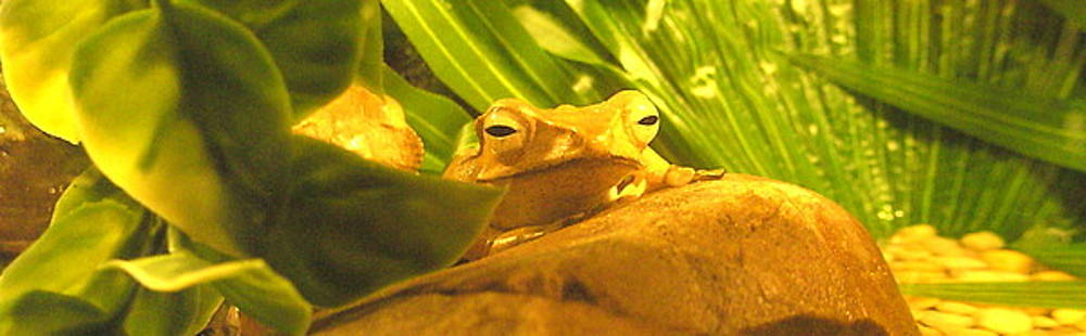 Tammy Bullard - Happy Frog