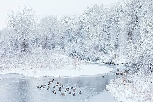 Happy Geese by Darren White