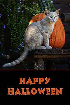 Nikolyn McDonald - Happy Halloween - Cat - Pumpkin