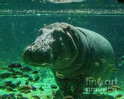 Happy Hippo by Jan Mulherin