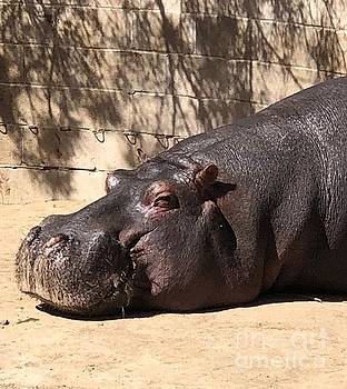 Happy Hippo by Laurie Lundquist