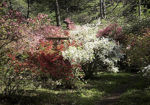 Teresa Mucha - Happy Hollow Gardens Path