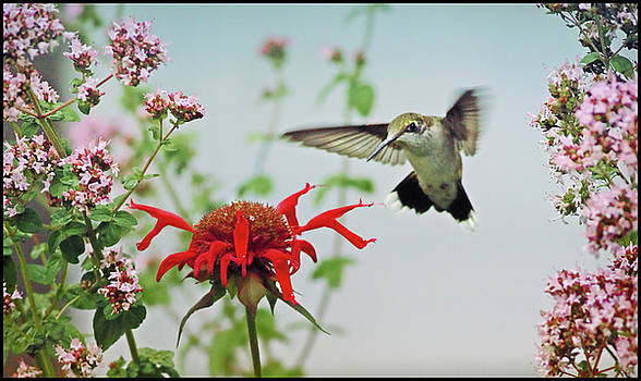 Happy Hummingbird by Ami Shecter by Paulinskill River Photography