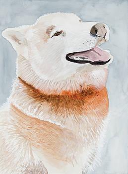 Happy Husky by Marcella Morse