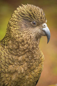 Happy Kea by Racheal Christian