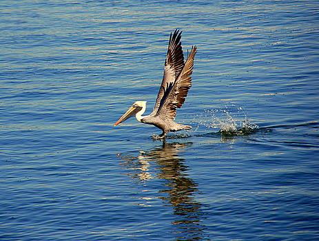 Susanne Van Hulst - Happy Landing Pelican