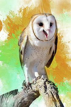 Barbara Manis - Happy Little Barn Owl