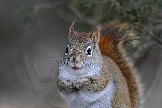 Happy Little Red Squirrel by Linda Crockett