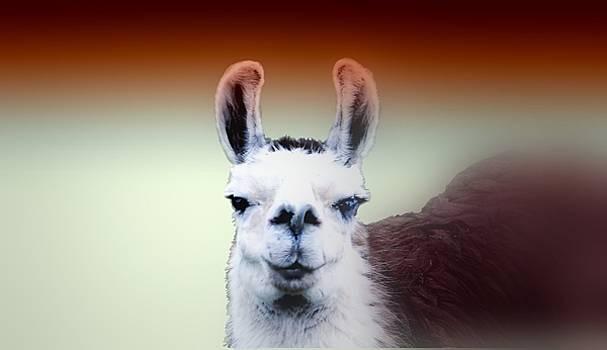 Happy Llama by Myrna Migala