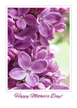 Happy Mother's Day Purple Lilac by Mariola Szeliga