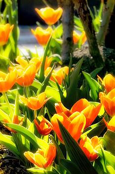 Sylvia J Zarco - Happy Orange Tulips