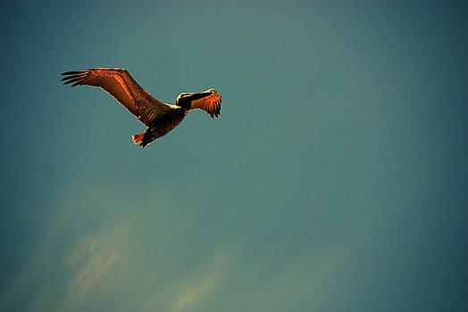 Susanne Van Hulst - Happy Pelican