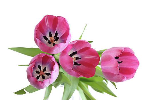 Happy Pink by Marie Leslie