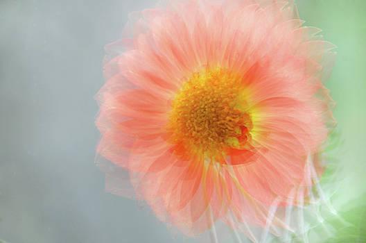Jenny Rainbow - Happy Single Wink