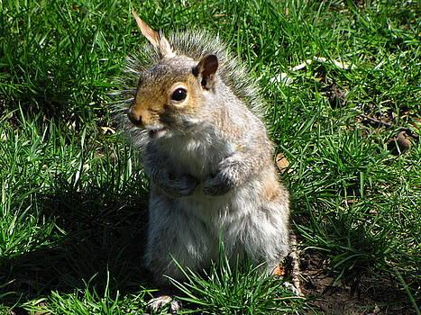 Happy Squirrel by Peter Aiello