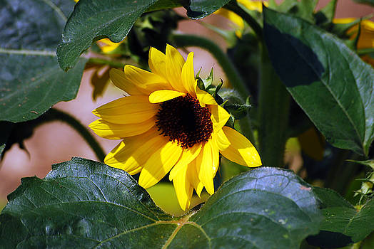 Happy To Be Yellow by Lori Tambakis