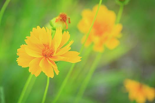 Happy Yellow Flowers by Joni Eskridge