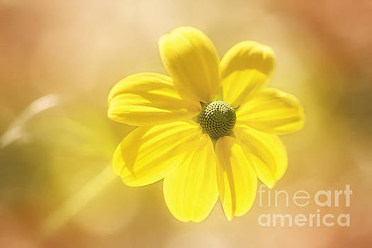 Happy Yellow by LHJB Photography