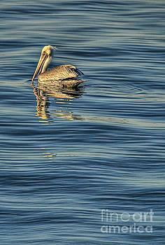 Harbor Area Pelican by Nick Carlson