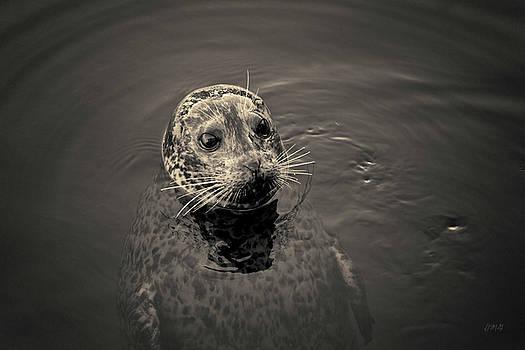 David Gordon - Harbor Seal I Toned