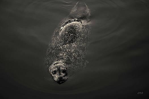 David Gordon - Harbor Seal II Toned