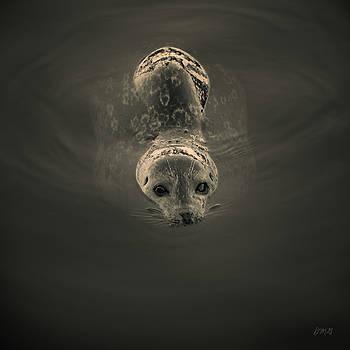 David Gordon - Harbor Seal V BW SQ Toned