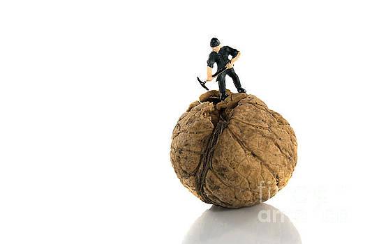Compuinfoto  - hard to crack walnut