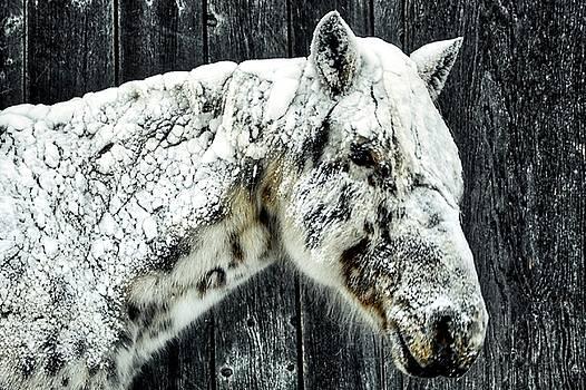 Hard Winter by Bryan Smith