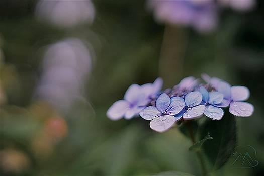 Gene Garnace - Hardy Blue