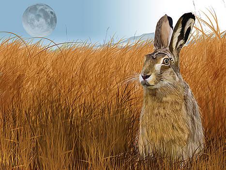 Hare in Grasslands by Nigel Follett