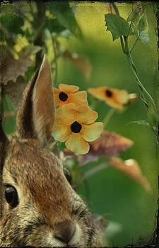 Gothicrow Images - Hare In The Vines