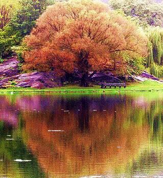 Harlem Meer Tree by Maria Scarfone