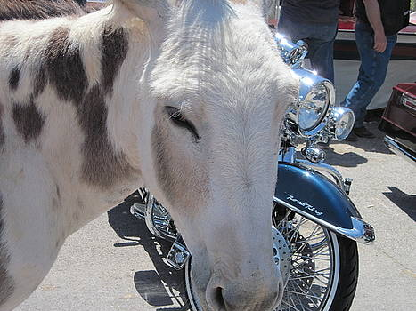 Harleys and JackAsses by JoAnn Tavani