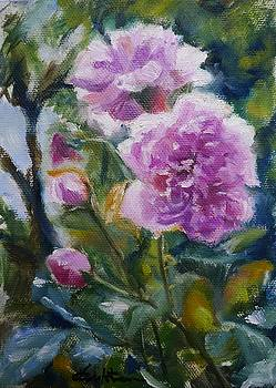 Harlow Carr Roses by Veronica Coulston
