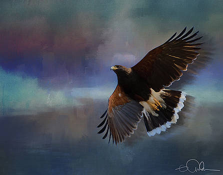 Harris Hawk by Gloria Anderson