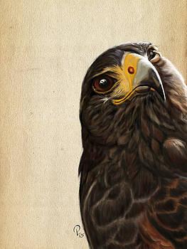 Harris Hawk by Pia Langfeld