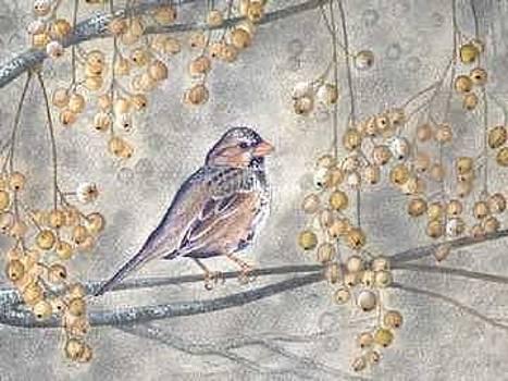 Harris Sparrow by Elizabeth H Tudor