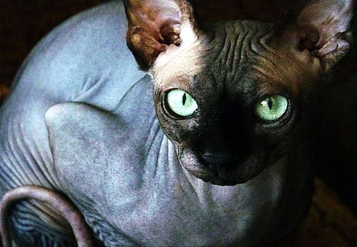 Harry the cat by Ruben  Flanagan