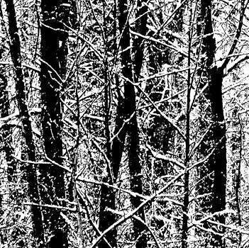 Bill Kellett - Harsh Winter